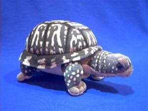 box turtle plush stuffed animal