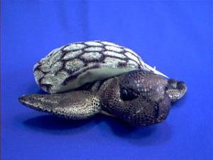 green sea turtle plush stuffed animal