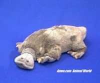 platypus plush stuffed animal toy fiesta