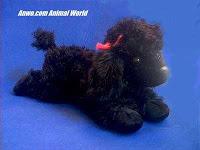black poodle plush stuffed animal toy star