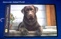 chocolate lab doormat welcome mat