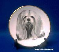 Porcelain Rosalinde Lhasa Apso Plate