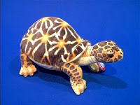 Desert Turtle Stuffed Animal Plush Toy