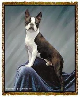 Boston Terrier Throw Blanket Tapestry