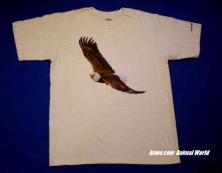 Bald Eagle T Shirt USA