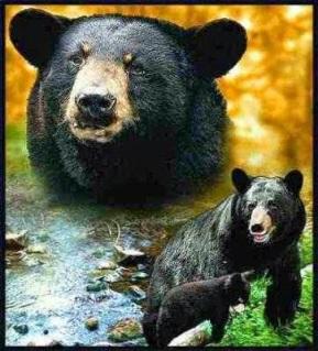 Black Bear Throw Blanket Tapestry Afghan USA